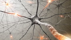 פעילות עצבית במוח. הדמיה