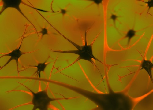 תאי עצב במוח (אילוסטרציה)