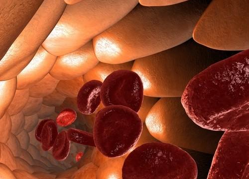 כלי דם (אילוסטרציה)