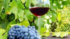 יין אדום (צילום: אילוסטרציה)