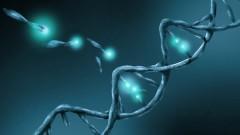 גנים (צילום: אילוסטרציה)